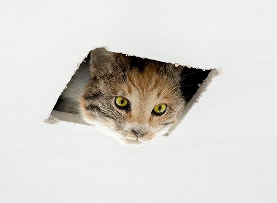 img_Eva & Franco Mattes, *Ceiling Cat*, 2016,  Präparierte Katze, Polyrethanharz, Deckenöffnung © Eva & Franco Mattes, Courtesy Carroll/Fletcher, London